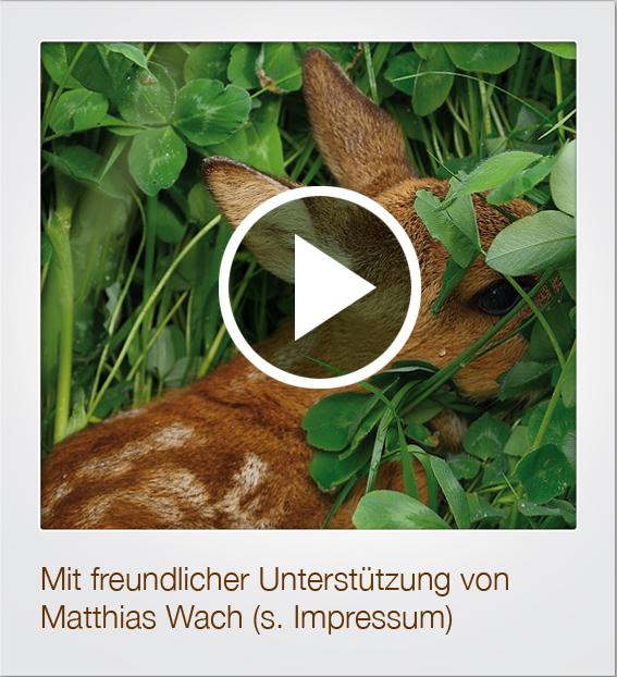 Kitz 2 FrameVideo