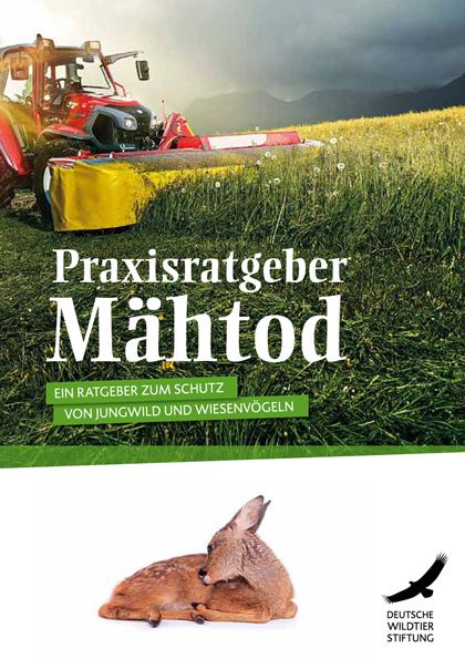Vorschaubild Downloads Ratgeber Maehtod
